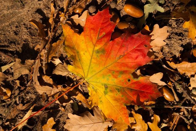 Leaf lake colorful, nature landscapes.