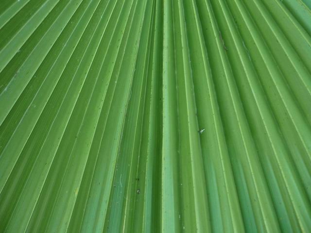 Leaf leaflets palm tree, nature landscapes.