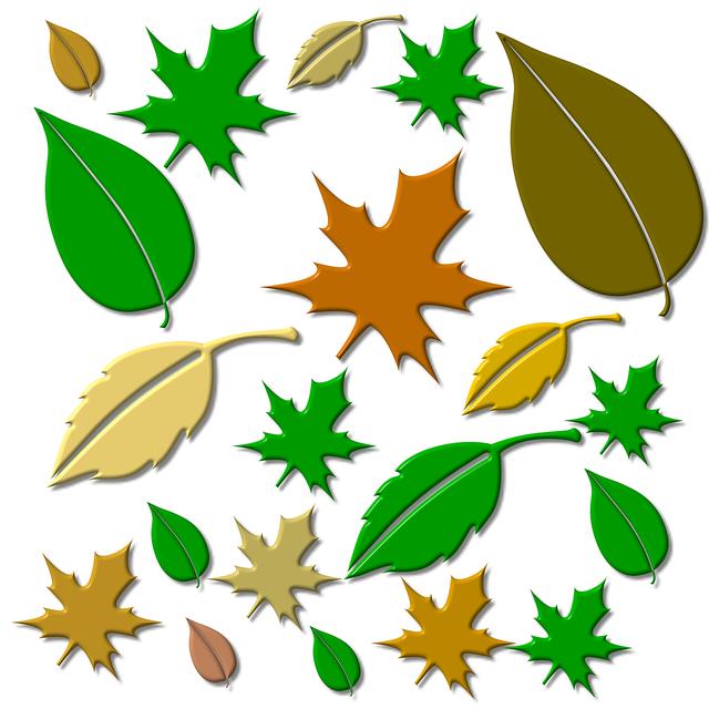 Leaf leaves autumn forest, nature landscapes.