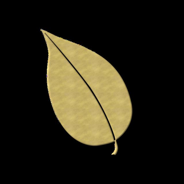 Leaf leaves fall foliage, nature landscapes.