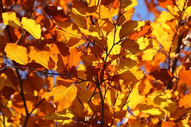 Leaf leaves yellow.