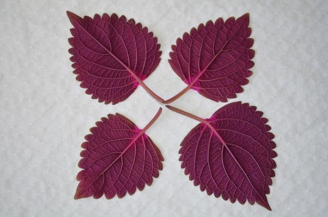 Leaf natur natural, nature landscapes.