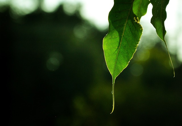Leaf nature textures, nature landscapes.