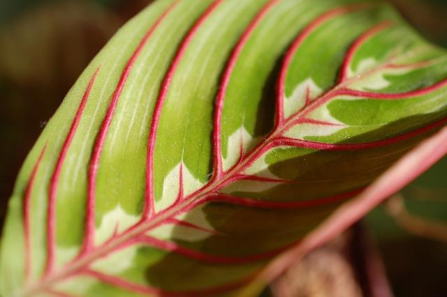 Leaf plant foliage, nature landscapes.