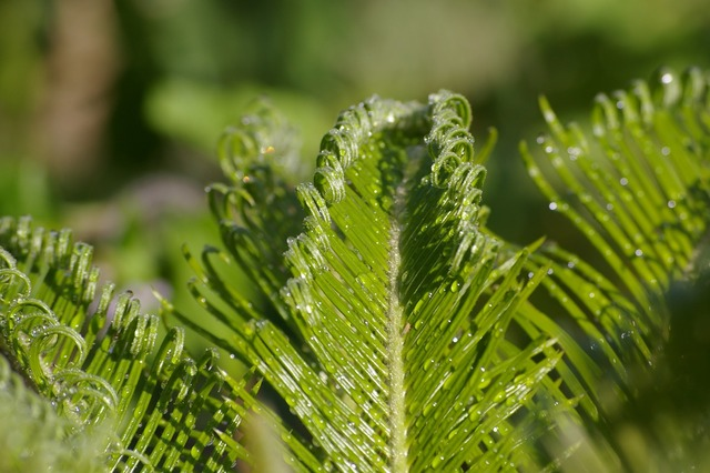 Leaf plant fronds, nature landscapes.