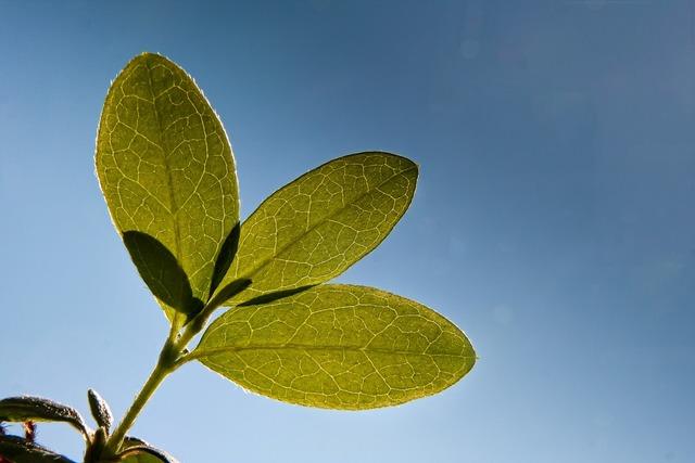 Leaf plant vegetation, nature landscapes.