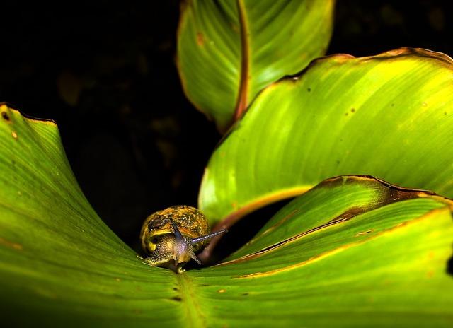 Leaf snail plant, nature landscapes.