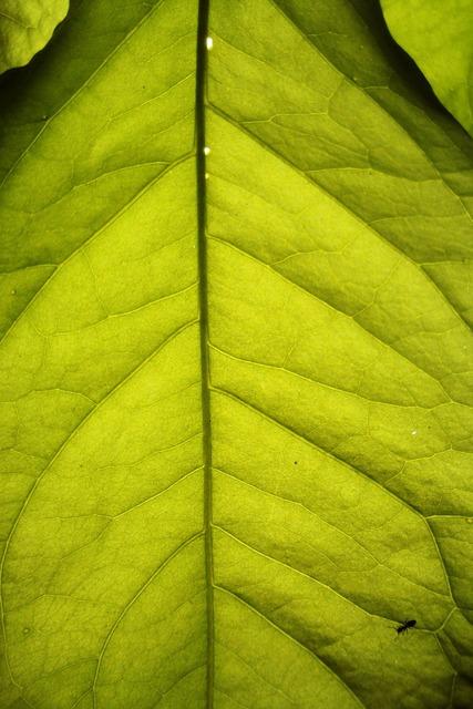 Leaf tropical close-up, nature landscapes.