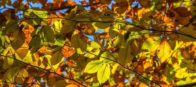 Leaves autumn color, nature landscapes.