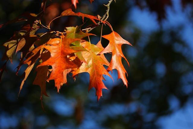 Leaves colorful autumn, nature landscapes.