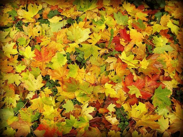 Leaves forest autumn, nature landscapes.