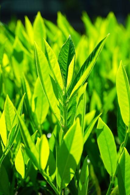 Leaves green back light, nature landscapes.