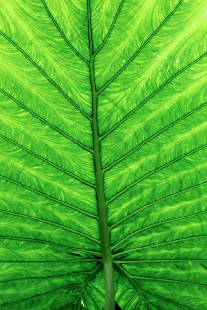 Leaves green leaf, nature landscapes.