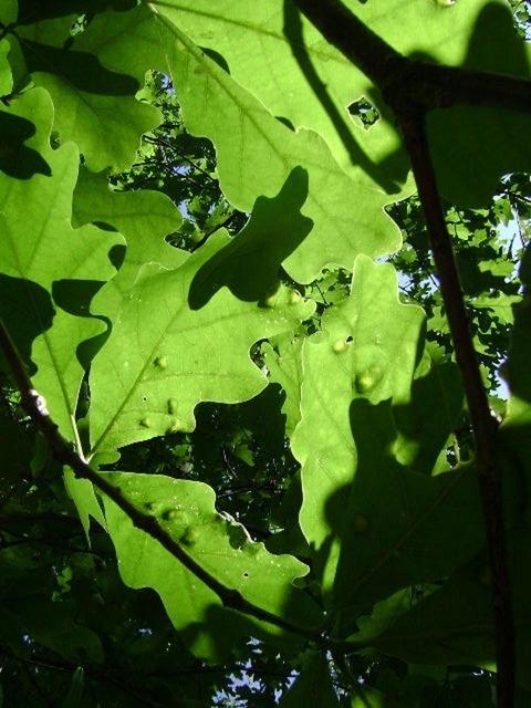 Leaves green plants.