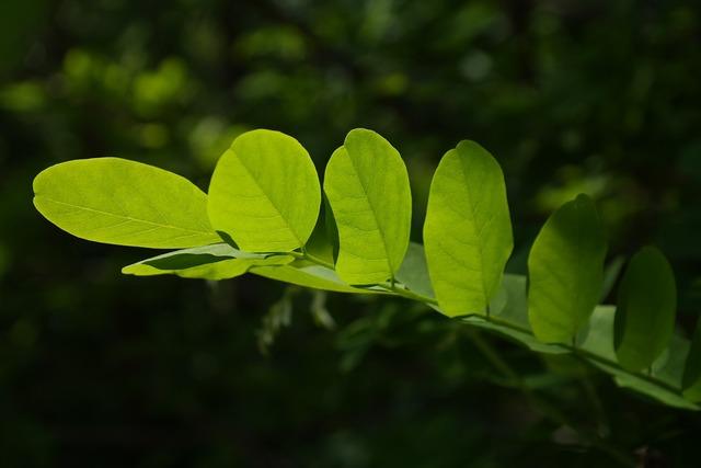 Leaves green tree.