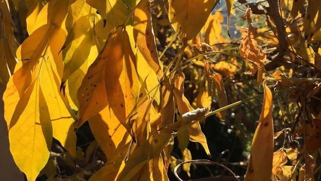 Leaves sun season.
