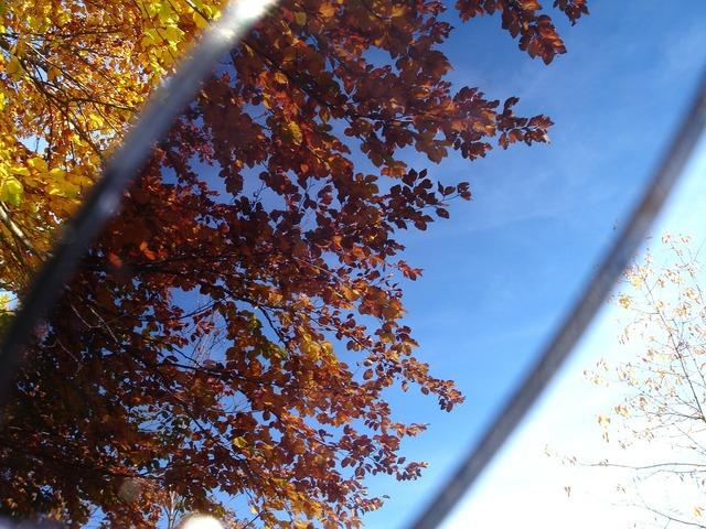 Leaves sunglasses filter, nature landscapes.