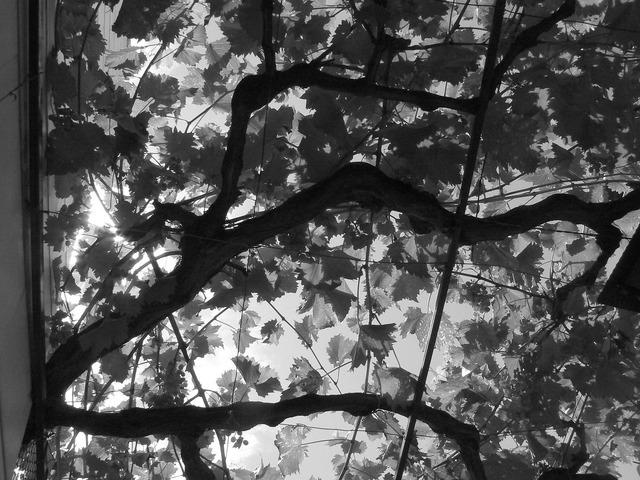Leaves walk sun, nature landscapes.