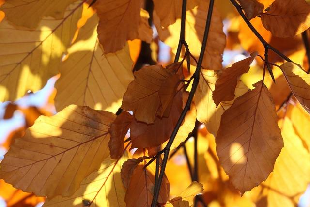 Leaves yellow autumn.