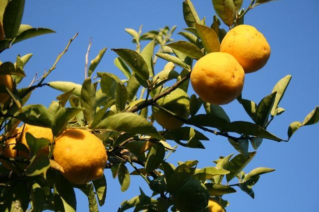 Lemons fruit citrus, food drink.