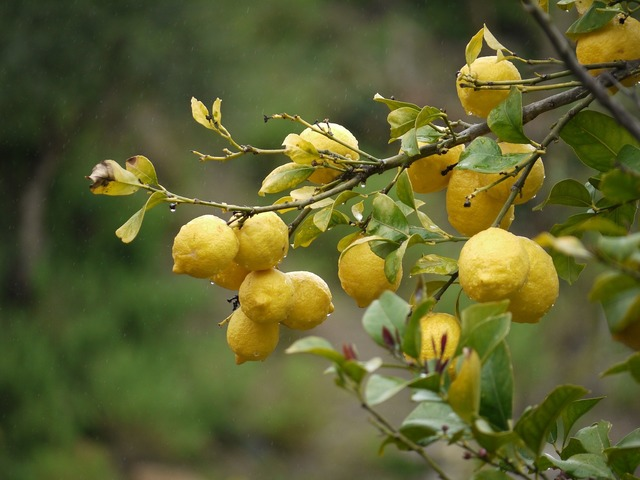 Lemons fruit yellow, food drink.