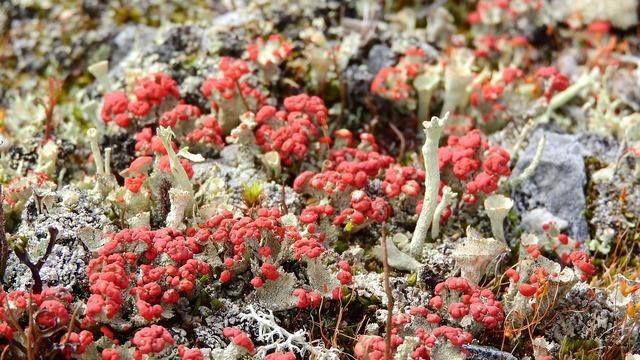 Lichen land ground.