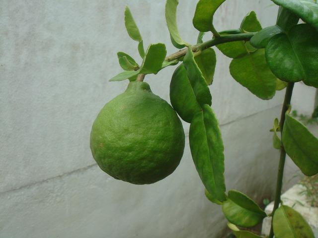Lime citrus fruit, food drink.