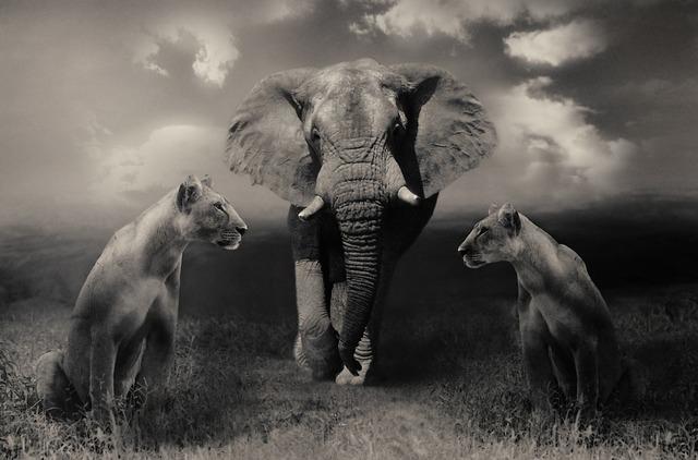 Lionesses lion elephant, nature landscapes.