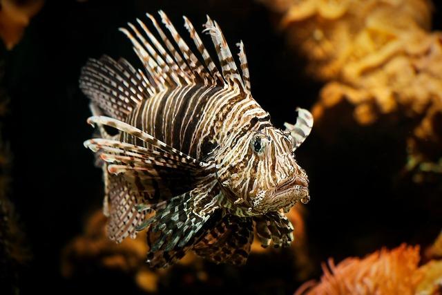 Lionfish aquarium coral, travel vacation.