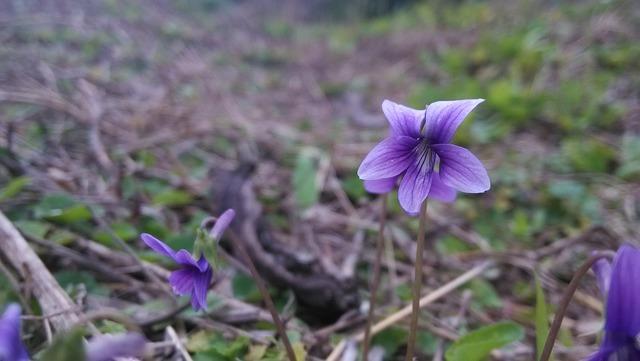 Little flower wild flowers plant, nature landscapes.