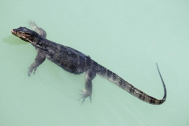 Lizard reptile wild.