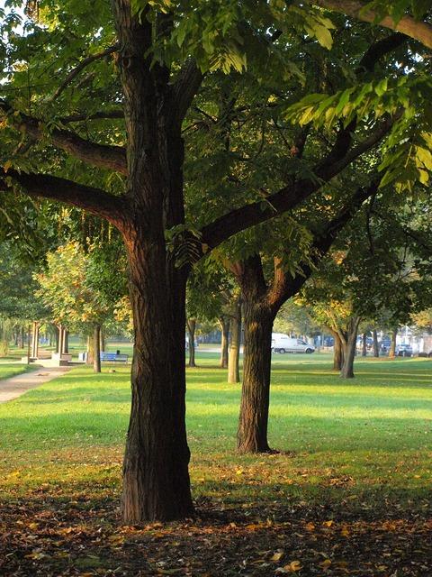 Log main park.