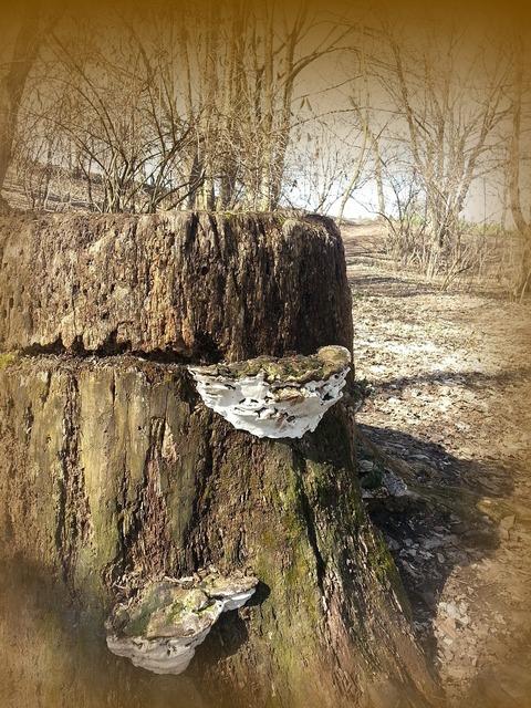 Log tree fungus tree.
