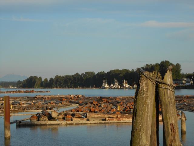 Logs lumber river, transportation traffic.