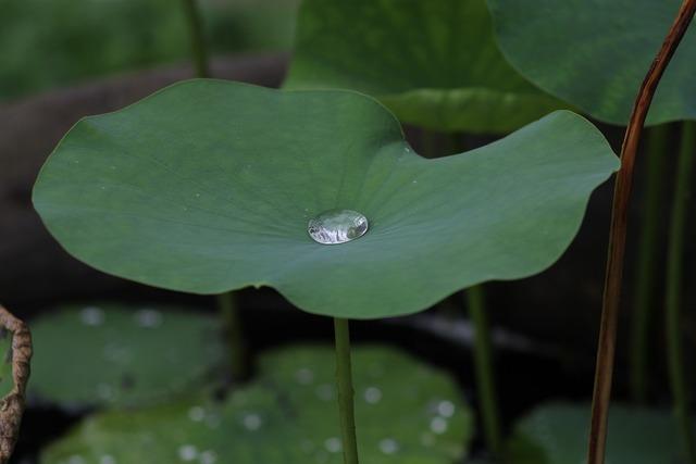 Lotus blu thailand.