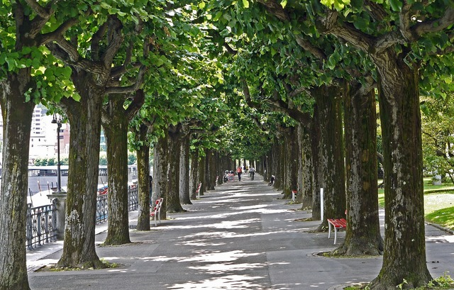 Lugano lake promenade avenue, nature landscapes.