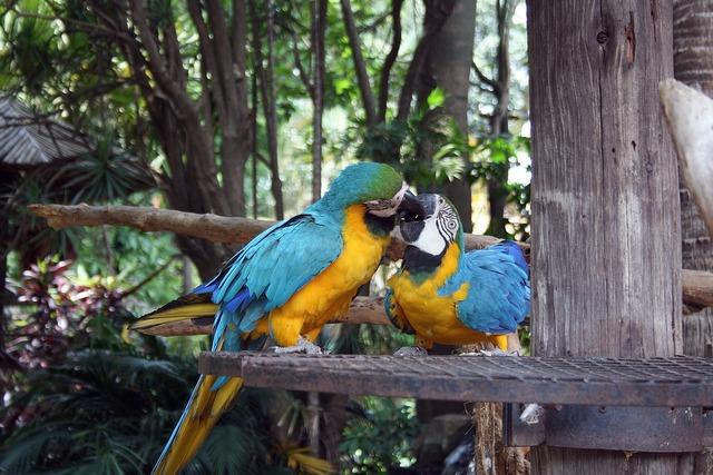 Macaw parrots birds parrots.