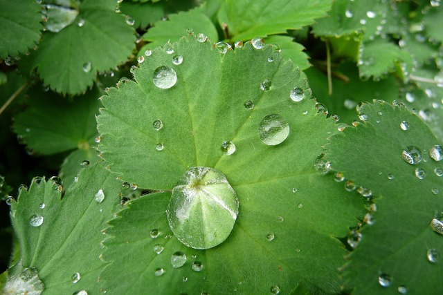 Macro drop of water green leaf, nature landscapes.