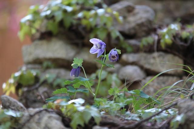 Maebaltop sky flowers purple flowers, nature landscapes.