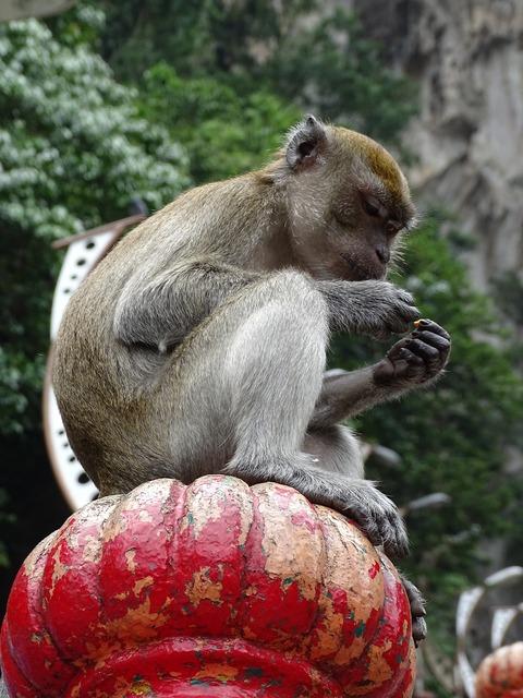 Malaysia batu caves the monkey.