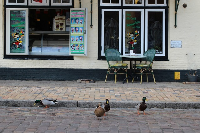 Mallard mätzente ducks, transportation traffic.