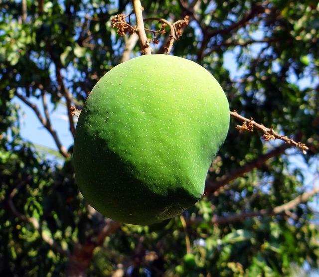Mango mangifera indica fruit, food drink.