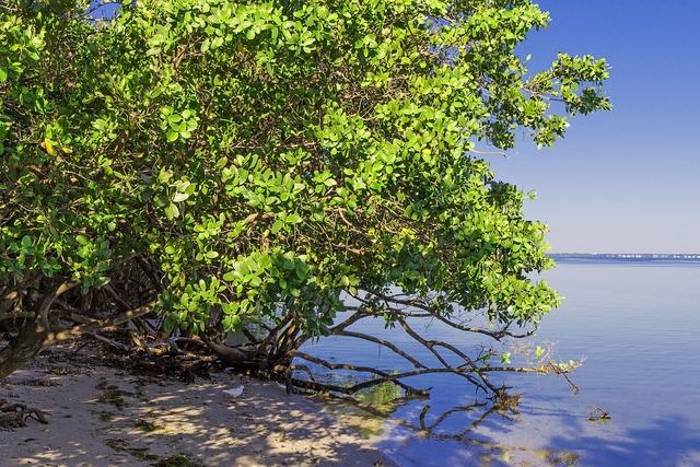Mangrove vegetation beach, travel vacation.