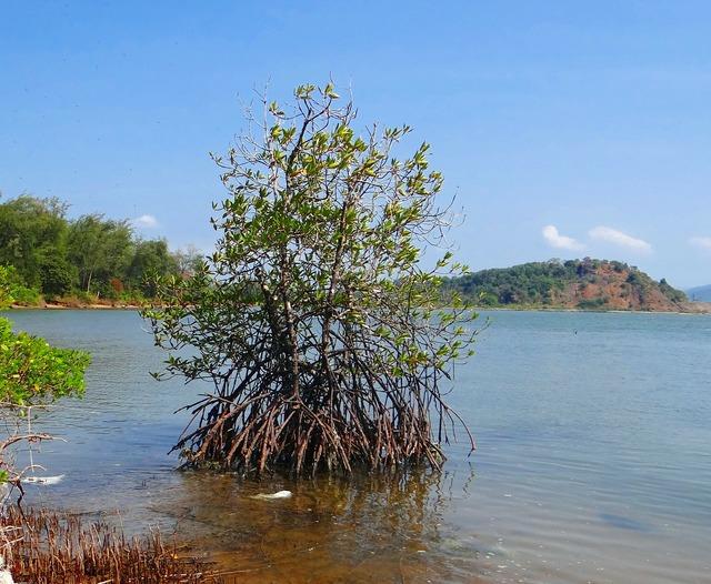Mangroves tidal forest creek.