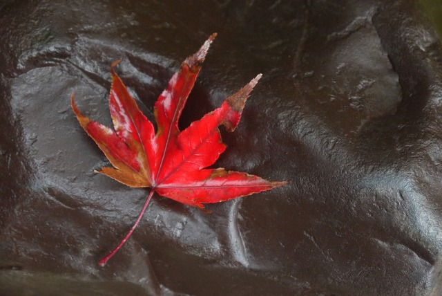Maple fall leaf, nature landscapes.