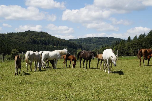 Mares foal arabs.