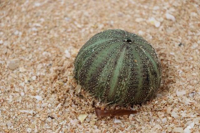 Marine urchin urcheon, travel vacation.