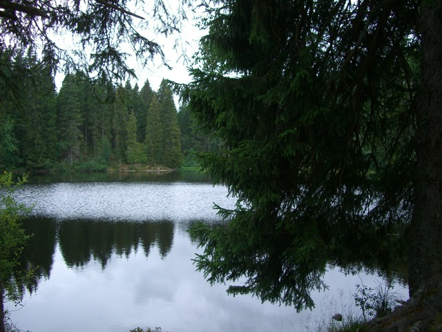 Mathisleweiher bog lake mirroring.