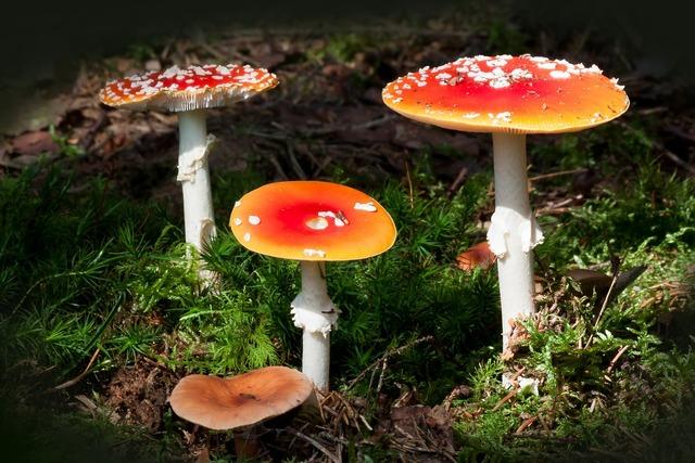 Matryoshka amanita muscaria mushroom, nature landscapes.
