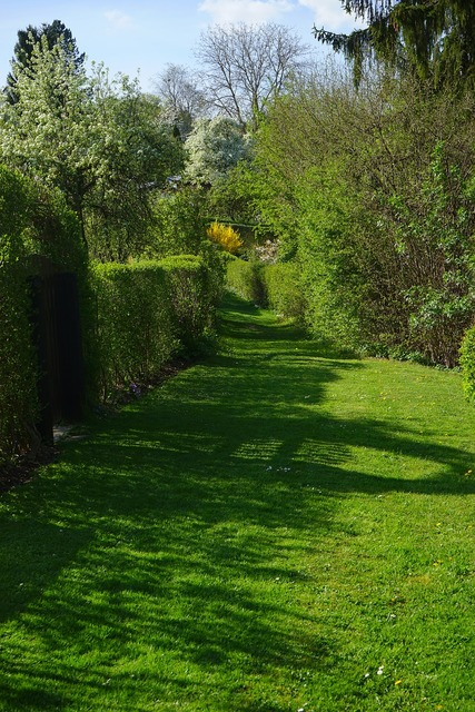 Meadow away hedge, nature landscapes.